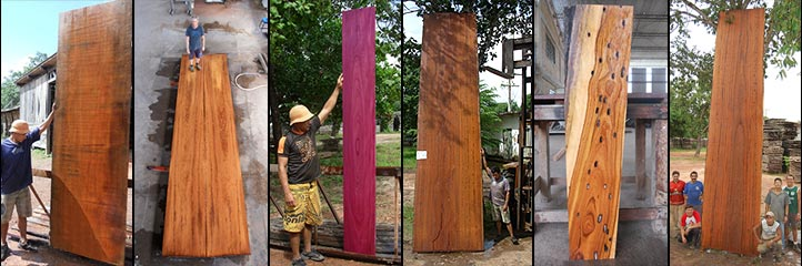 rare wood and tropical hardwoods for sale in Brazil